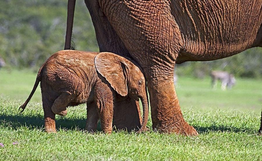 AASAB-Benny-Rebel-Fotoreise-Suedafrika-Elefant