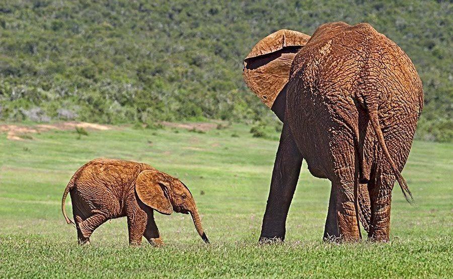 AASAC-Benny-Rebel-Fotoreise-Suedafrika-Elefant