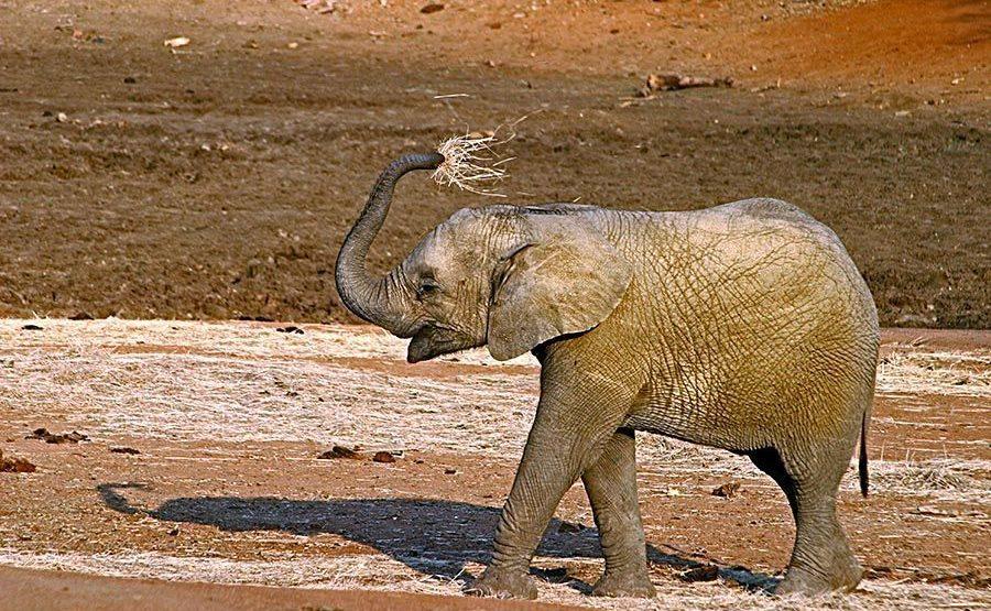 AASAM-Benny-Rebel-Fotoreise-Suedafrika-Elefant