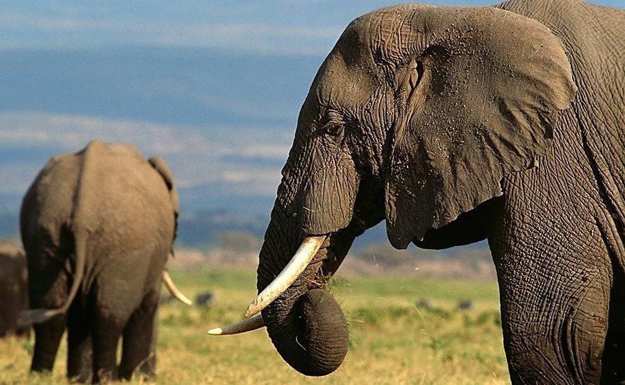 AASAN-Benny-Rebel-Fotoreise-Kenia-Elefant