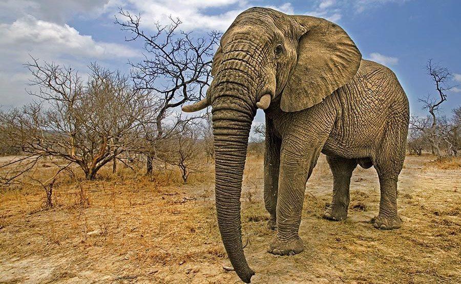 AASAN-Benny-Rebel-Fotoreise-Suedafrika-Elefant