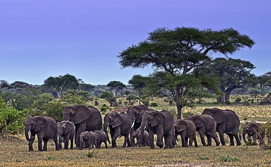 AASAN-Benny-Rebel-Fotoreise-Tansania-Elefant