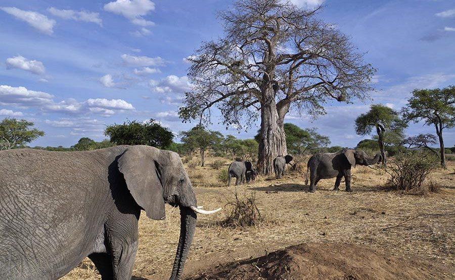 AASANA-Benny-Rebel-Fotoreise-Tansania-Elefant