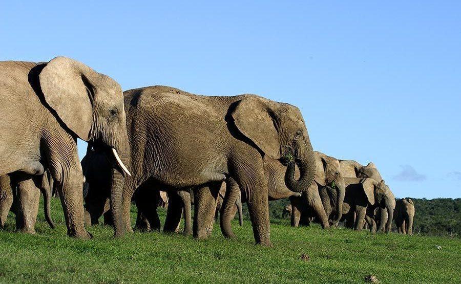 AASAO-Benny-Rebel-Fotoreise-Suedafrika-Elefant