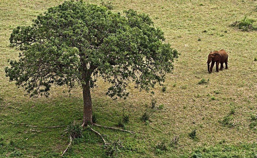 AASAO-Benny-Rebel-Fotoreise-Tansania-Elefant