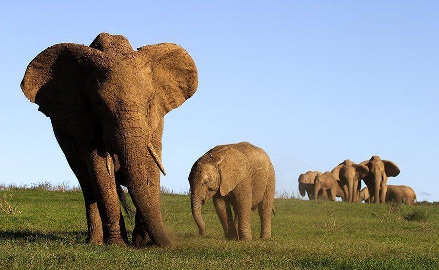 AASAP-Benny-Rebel-Fotoreise-Suedafrika-Elefant