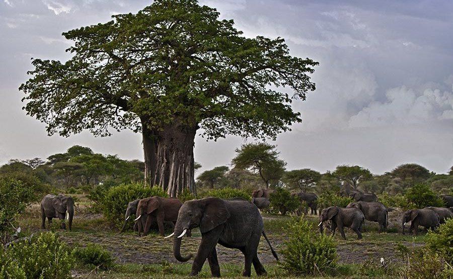 AASAP-Benny-Rebel-Fotoreise-Tansania-Elefant