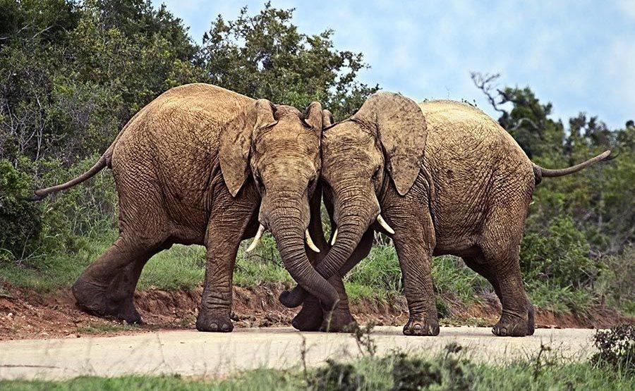 AASB-Benny-Rebel-Fotoreise-Suedafrika-Elefant