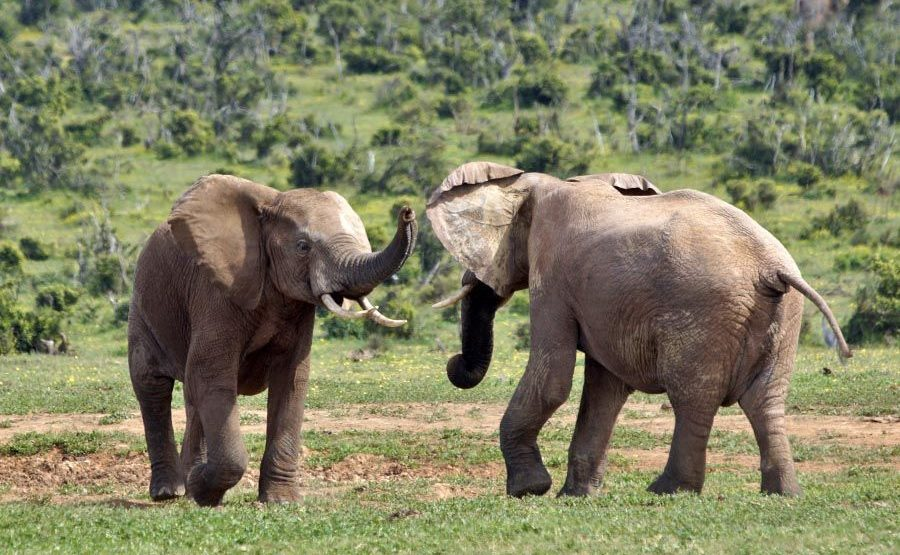 AASBAA-Benny-Rebel-Fotoreise-Suedafrika-Elefant