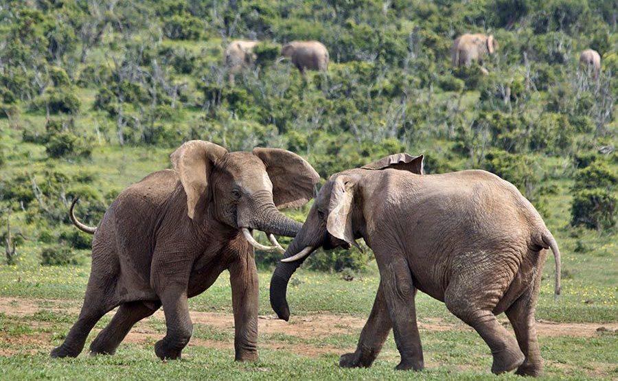 AASBAB-Benny-Rebel-Fotoreise-Suedafrika-Elefant
