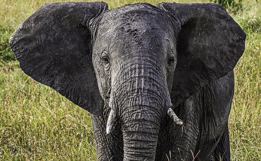 AASBB-Benny-Rebel-Fotoreise-Kenia-Elefant