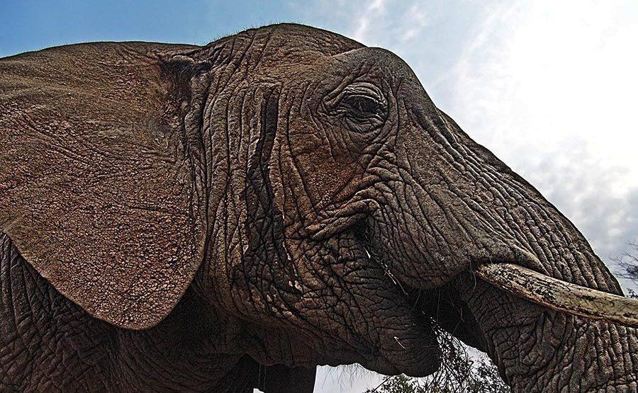 AASD-Benny-Rebel-Fotoreise-Suedafrika-Elefant