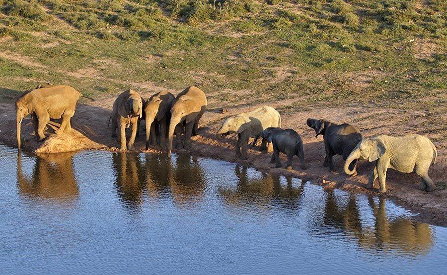 AAUA-Benny-Rebel-Fotoreise-Namibia-Elefant