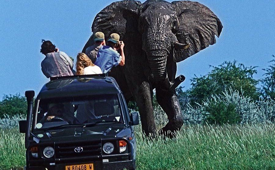 AAW-Benny-Rebel-Fotoreise-Namibia-Elefant