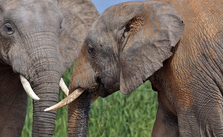 AAWA-Benny-Rebel-Fotoreise-Suedafrika-Elefant