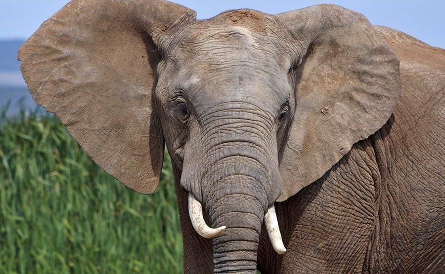AAWB-Benny-Rebel-Fotoreise-Suedafrika-Elefant