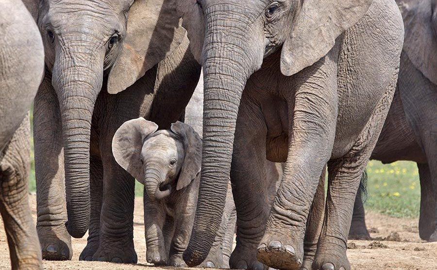 AAWC-Benny-Rebel-Fotoreise-Suedafrika-Elefant