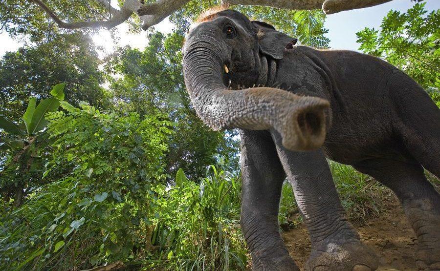 ABA-Benny-Rebel-Fotoreise-ElefantSri-Lanka