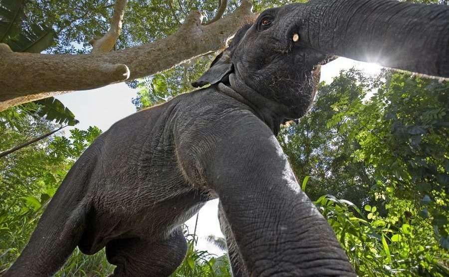 ABB-Benny-Rebel-Fotoreise-ElefantSri-Lanka