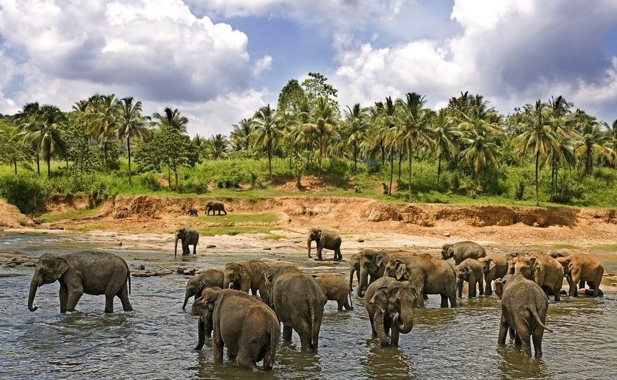 ABC-Benny-Rebel-Fotoreise-ElefantSri-Lanka