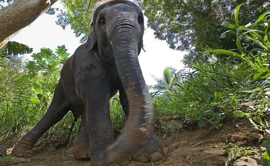 ABCA-Benny-Rebel-Fotoreise-ElefantSri-Lanka