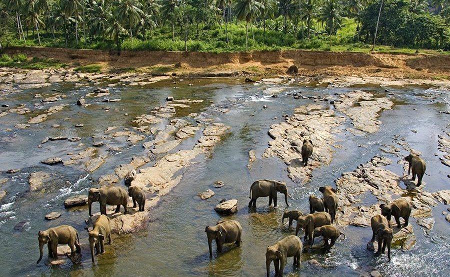 ABCS-Benny-Rebel-Fotoreise-ElefantSri-Lanka