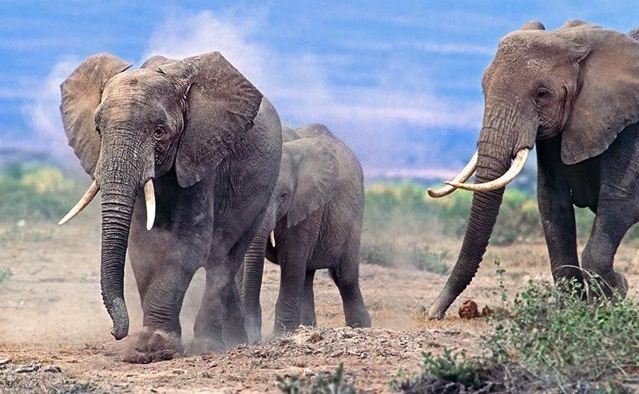 ABDB-Benny-Rebel-Fotoreise-Kenia-Elefant