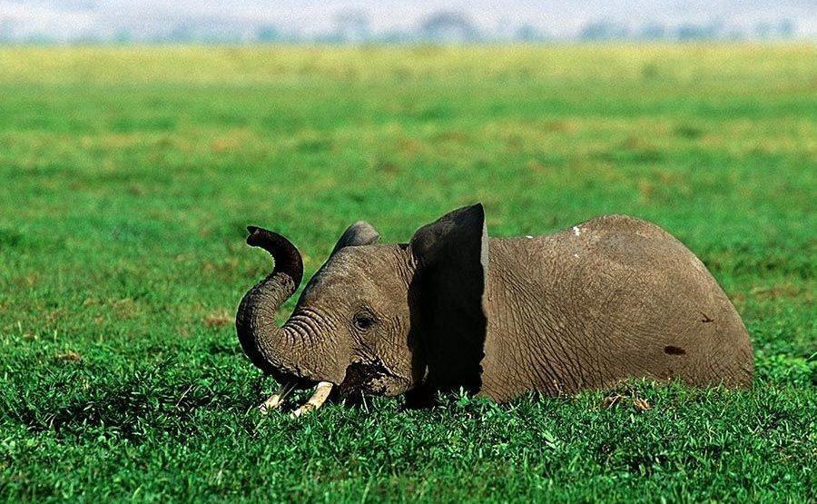 ABDC-Benny-Rebel-Fotoreise-Kenia-Elefant