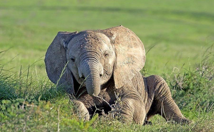 ABDC-Benny-Rebel-Fotoreise-Suedafrika-Elefant