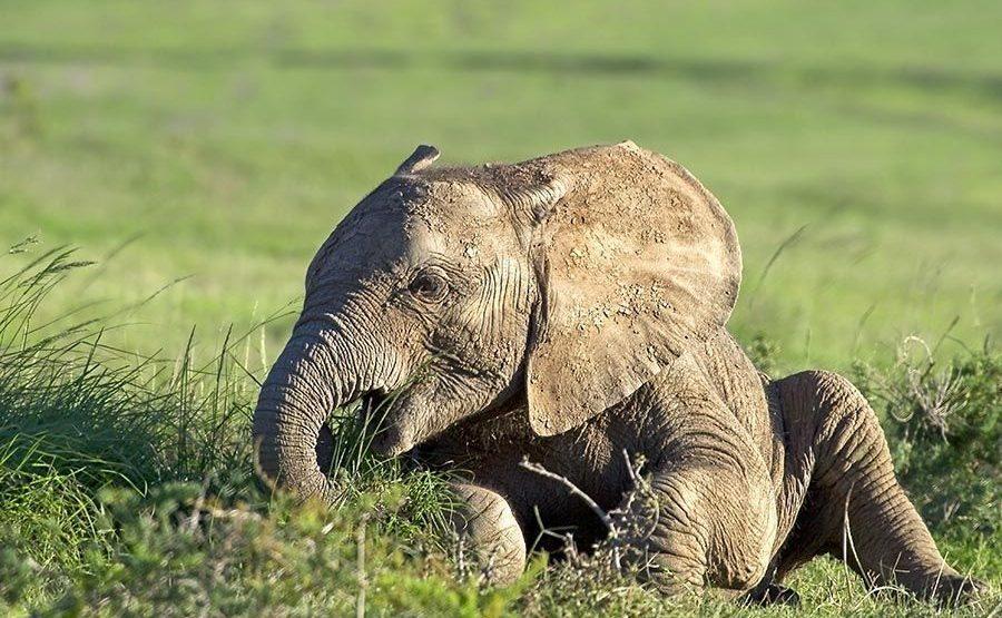 ABDD-Benny-Rebel-Fotoreise-Suedafrika-Elefant