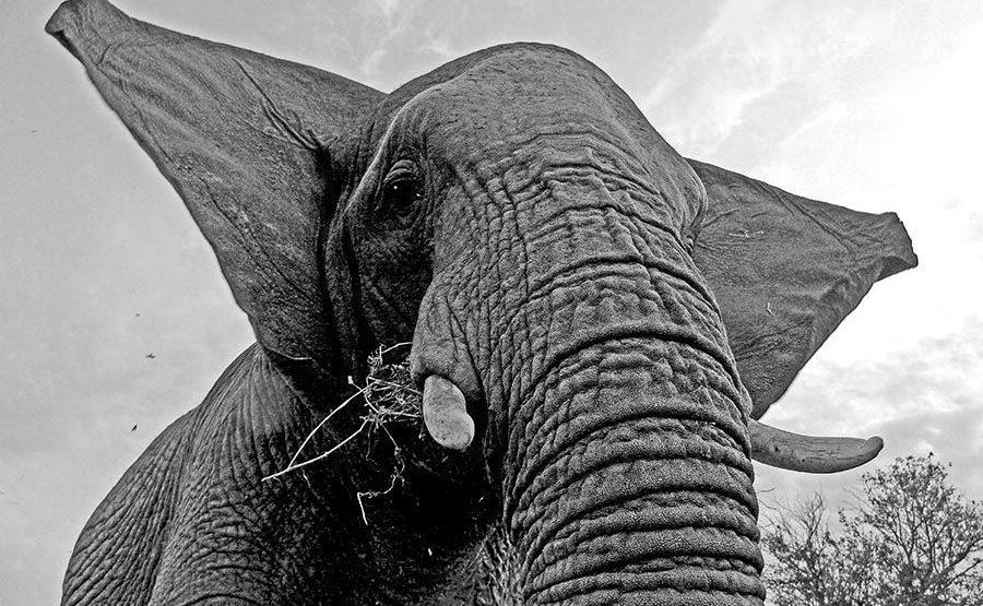 ABDF-Benny-Rebel-Fotoreise-Suedafrika-Elefant