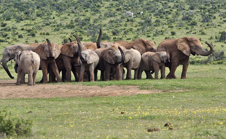 ABDH-Benny-Rebel-Fotoreise-Suedafrika-Elefant
