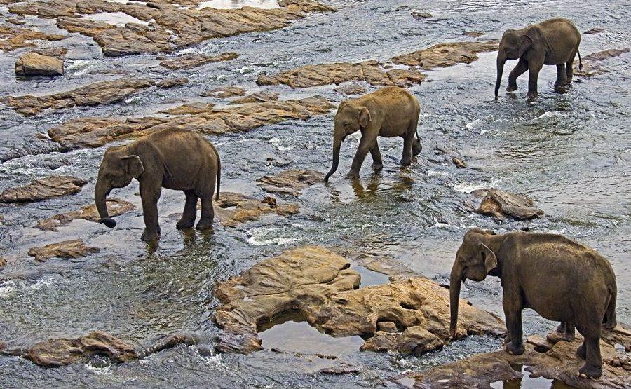 ABZA-Benny-Rebel-Fotoreise-ElefantSri-Lanka