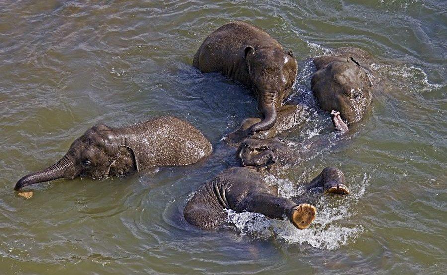 ABZB-Benny-Rebel-Fotoreise-ElefantSri-Lanka