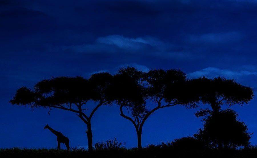 AG-Benny-Rebel-Fotoreise-Tansania-Giraffe