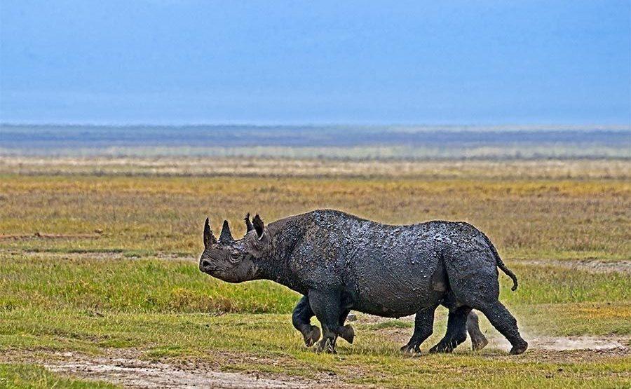 AGA-Benny-Rebel-Fotoreise-Tanzania-Nashorn-Spitzmaul