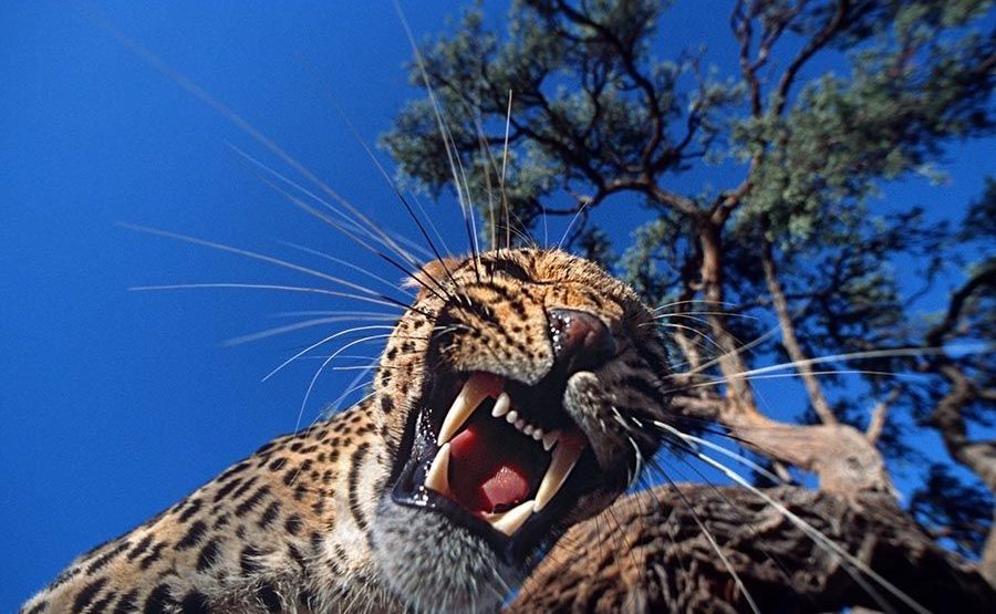 AH-Benny-Rebel-Fotoreise-Namibia-Leopard