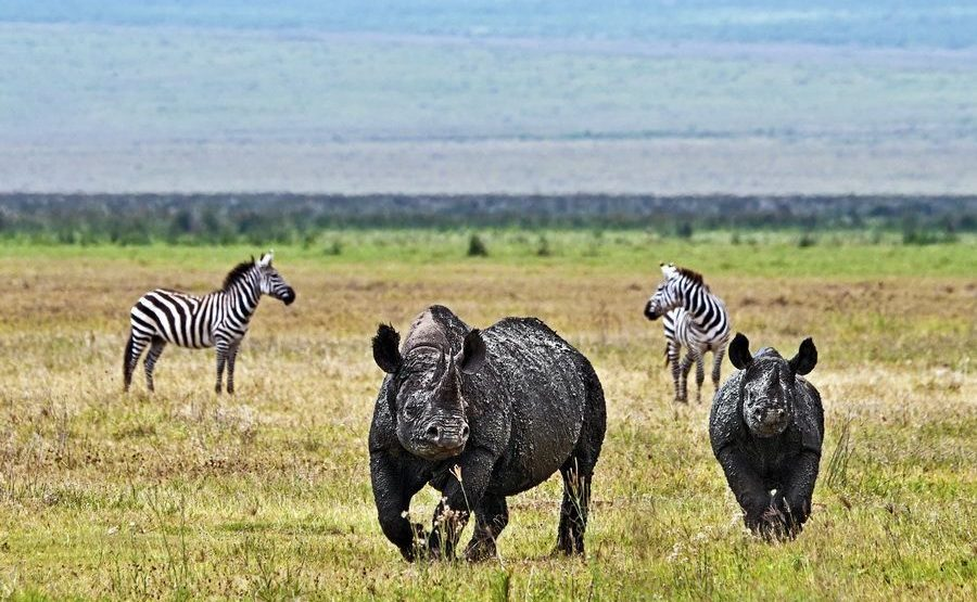 AH-Benny-Rebel-Fotoreise-Tanzania-Nashorn-Spitzmaul