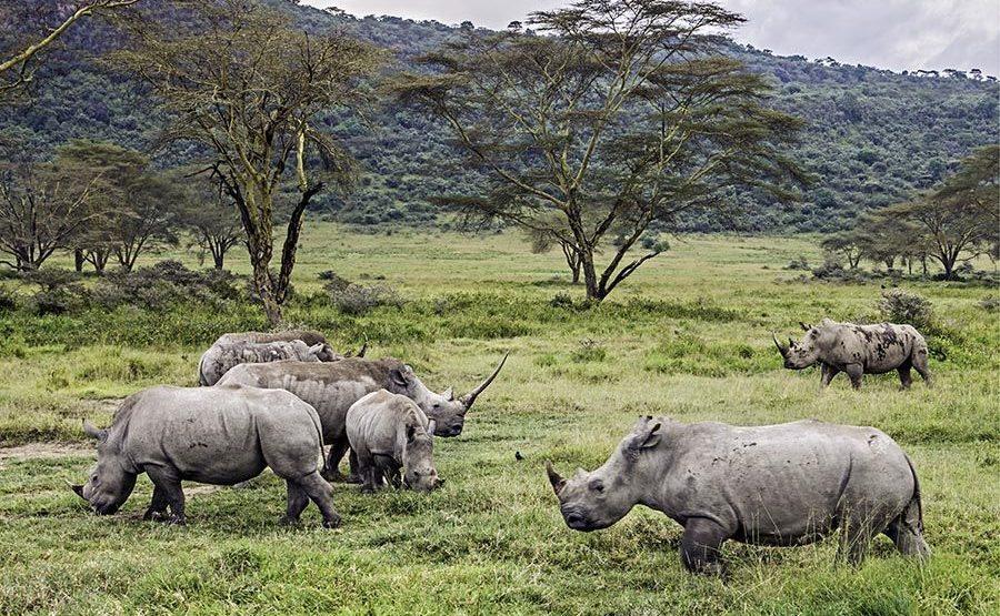 AHQR-Benny-Rebel-Fotoreise-Kenia-Nashorn-Breitmaul