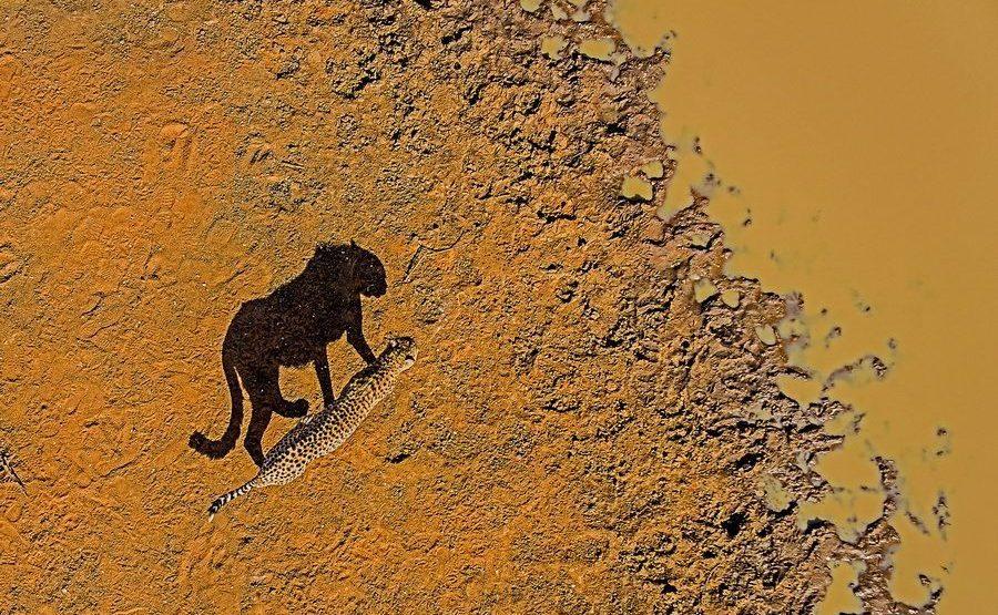 AL-Benny-Rebel-Fotoreise-Suedafrika-Gepard