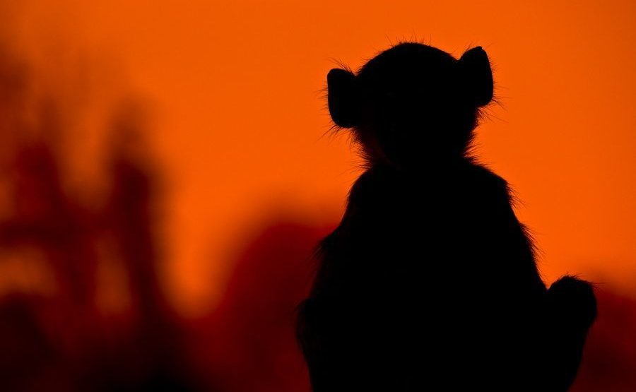 AL-Benny-Rebel-Fotoreise-Suedafrika-Pavian