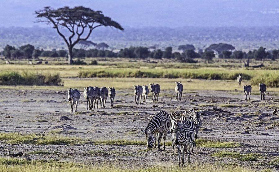 AN-Benny-Rebel-Fotoreise-Kenia-Zebra