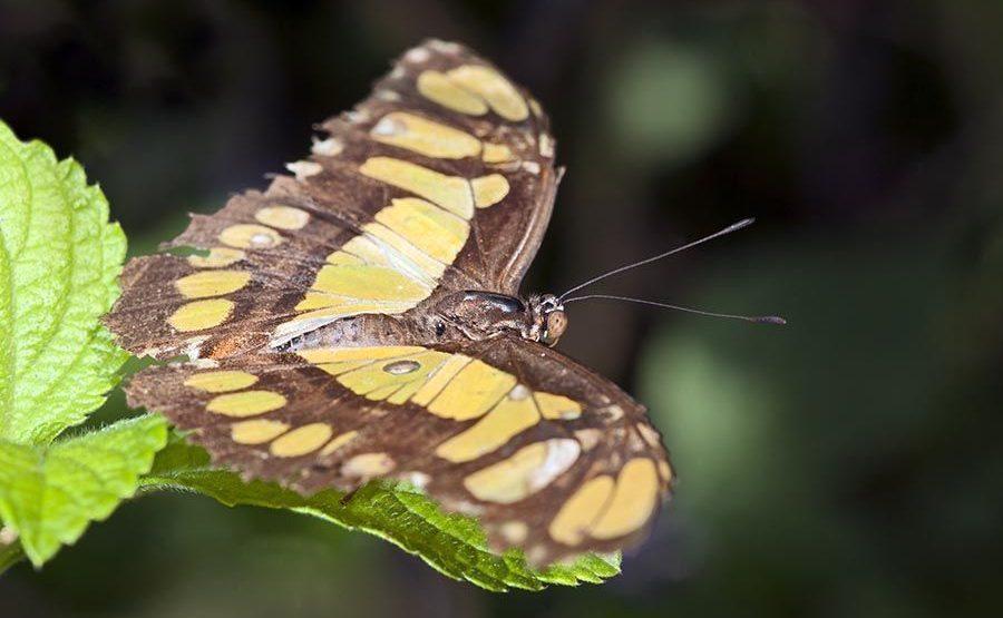 ANAA-Benny-Rebel-Fotoworkshop-Schmetterling-Costa-Rica