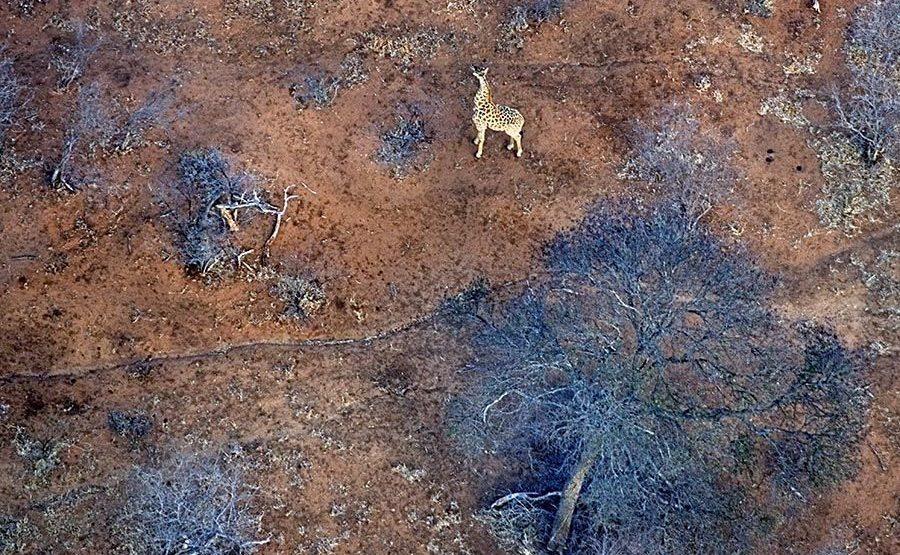 AO-Benny-Rebel-Fotoreise-Suedafrika-Giraffe