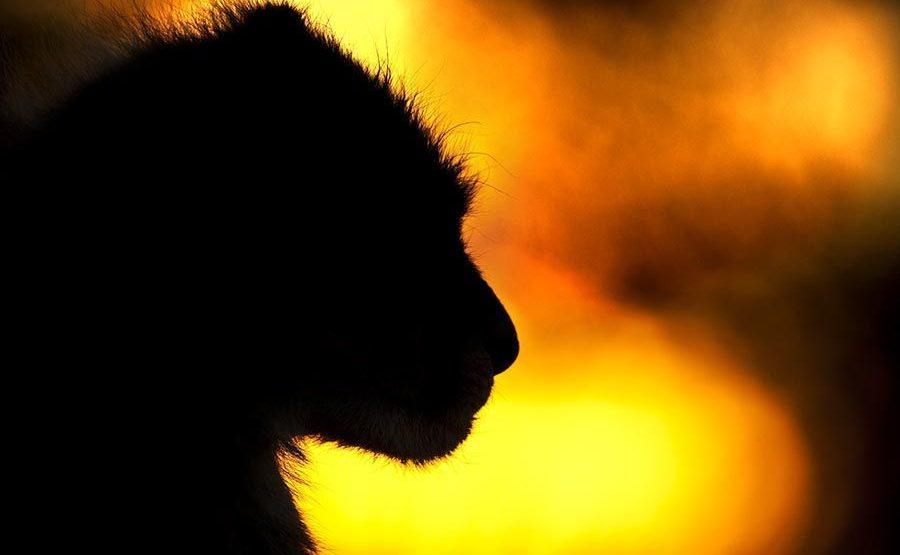 AOB-Benny-Rebel-Fotoreise-Suedafrika-Gepard