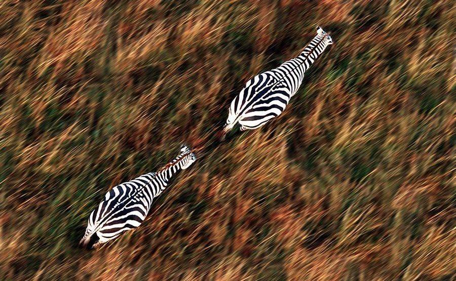 AP-Benny-Rebel-Fotoreise-Kenia-Zebra
