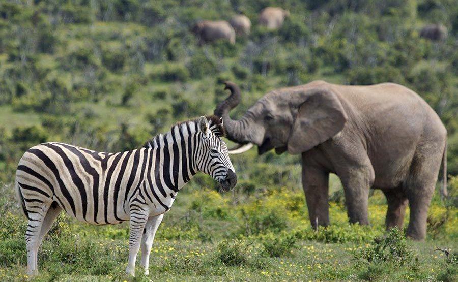 ASB-Benny-Rebel-Fotoreise-Suedafrika-Zebra