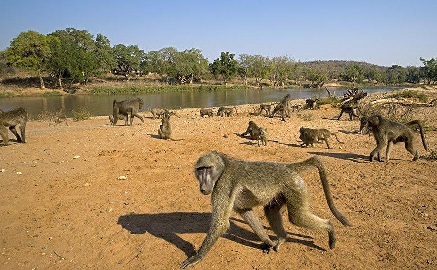 BAJQ-Benny-Rebel-Fotoreise-Suedafrika-Pavian