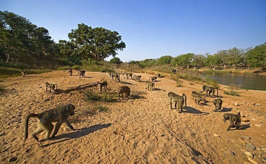 BAJR-Benny-Rebel-Fotoreise-Suedafrika-Pavian