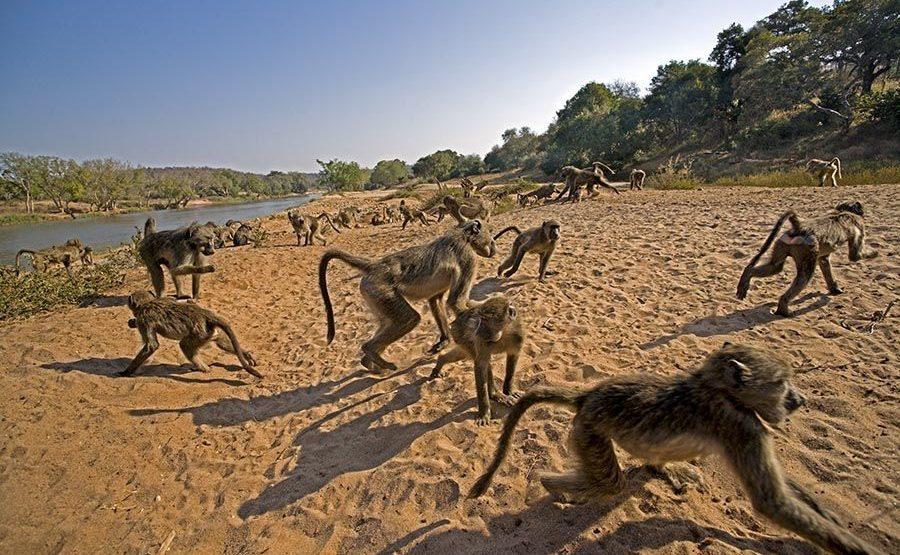 BAJS-Benny-Rebel-Fotoreise-Suedafrika-Pavian